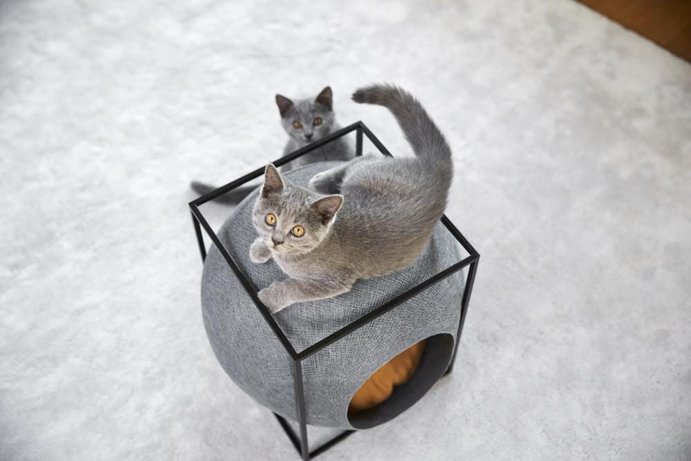 Meyou une niche bien trouv e diisign - Panier pour chat design ...