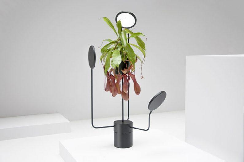 Viride par Goula/Figuera : la plante comme objet de déco